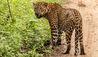 Leopard Trails Yala : Wildlife