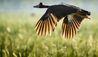 Bamurru Plains : Bird Watching