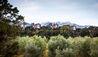 Hapuku Lodge + Tree Houses : Tree Houses