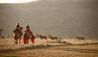 Elewana Lewa Safari Camp : Camel Trekking