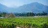 Mont Rochelle : Vineyards