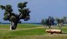 Masseria San Domenico : Golf Course