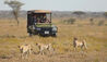 Namiri Plains Camp : Game Drive