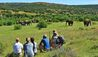Explorer Camp at Shamwari Private Game Reserve : Walking Safari