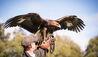 Gleneagles : Falconry