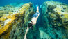 Fort Young Hotel & Dive Resort : Diving