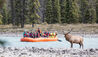 Rocky Mountaineer :  Athabasca River