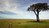 Mara Plains Camp : Wildlife
