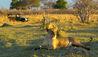 Zarafa Camp : Safari Experience
