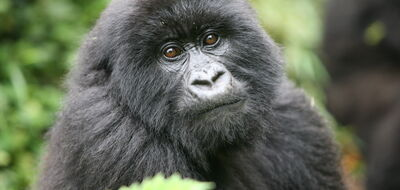 Unique Rwanda