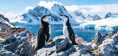 The Ultimate Antarctic Adventure with Silversea