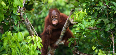 Borneo Race for the Rainforest Challenge with Singapore